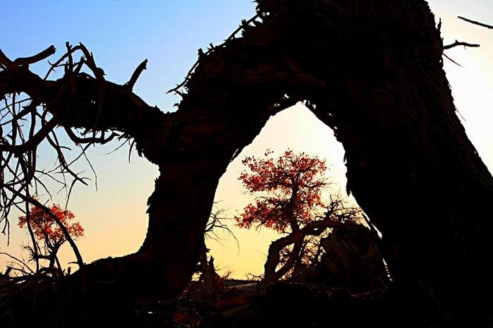 Геологический парк пустыни Алашань 95255