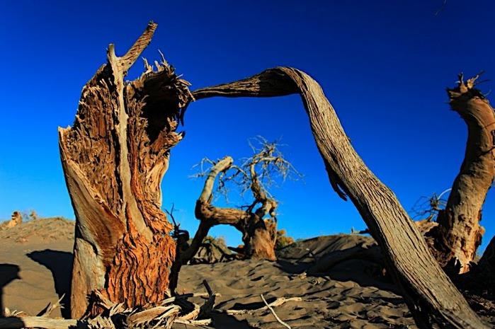 Геологический парк пустыни Алашань 49335