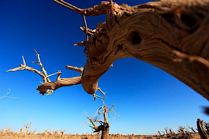 Геологический парк пустыни Алашань 43415