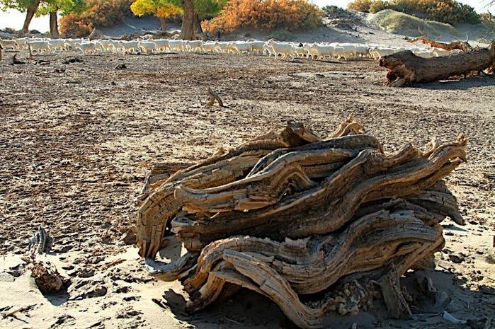 Геологический парк пустыни Алашань 93962