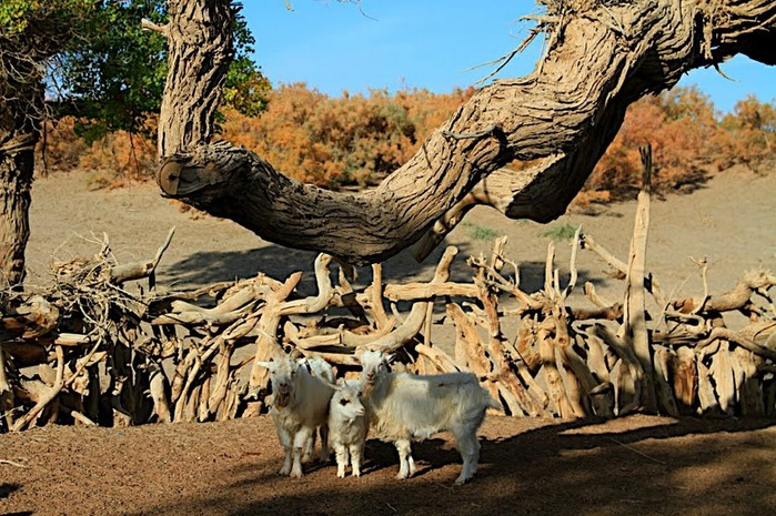 Геологический парк пустыни Алашань 64653