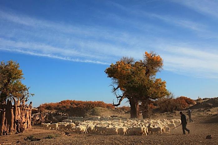 Геологический парк пустыни Алашань 42102