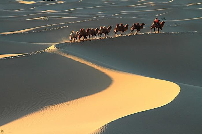 Геологический парк пустыни Алашань 11446