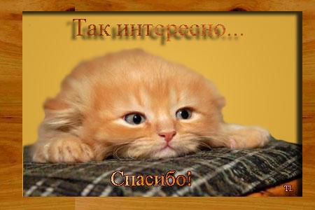 41777255_kisa_spasibo_interesno (450x300, 29Kb)