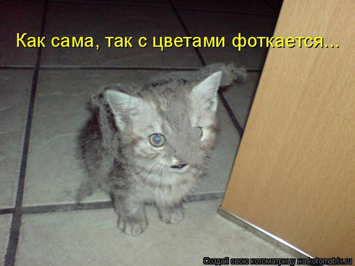 котоматрица котенок (700x524, 43Kb)