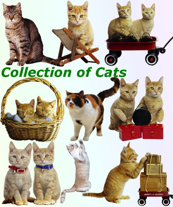 3291761_01Collection_of_Cats (586x700, 98Kb)