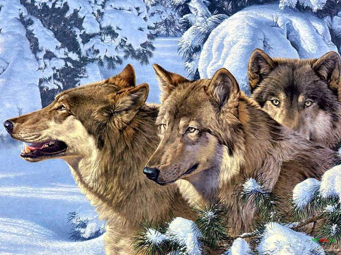 Волки. | Записи в рубрике