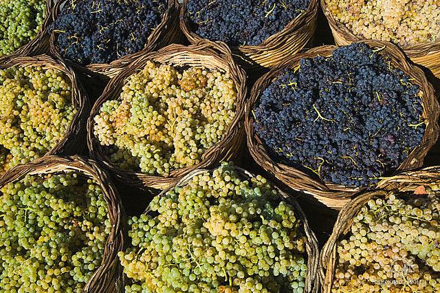 Корзинки с виноградом/1324117390_korzinkisvinogradom (640x426, 177Kb)
