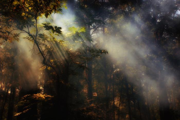1 волшебный красивый лес (700x468, 307Kb)