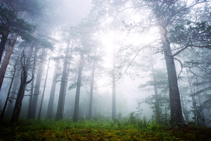 10 таинственный лес (700x468, 377Kb)