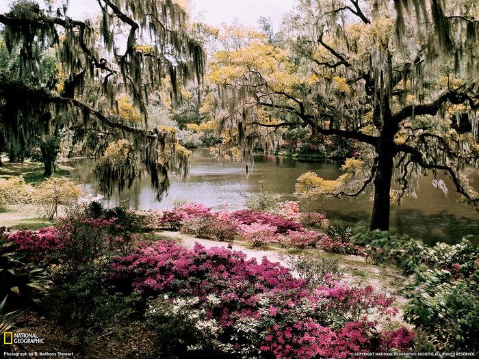 весенний сад (700x525, 320Kb)