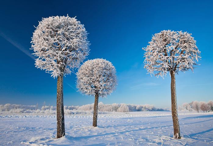 зима в литве (700x478, 389Kb)
