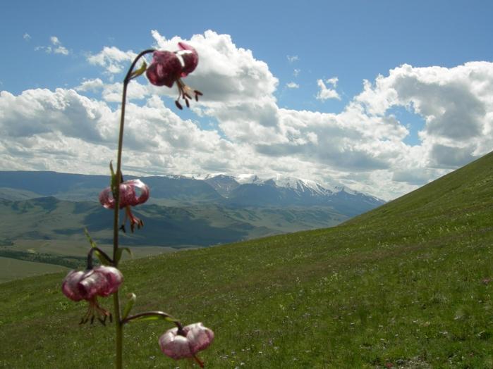 красивая природа горный склон (700x524, 265Kb)
