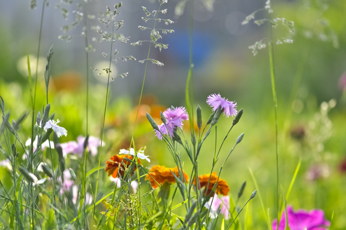 красивая цветная поляна (700x465, 181Kb)