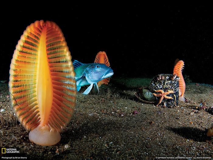 подводный мир красиво (700x525, 201Kb)