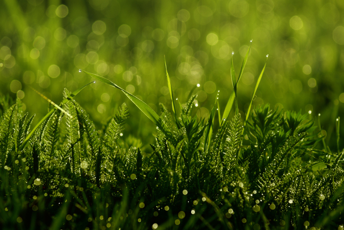сочная зелень лета (700x468, 358Kb)