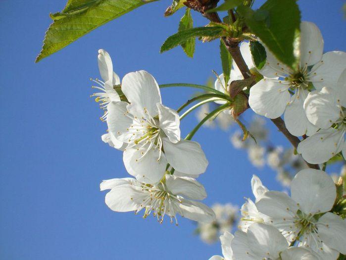 цветет весна (700x525, 46Kb)