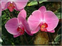 Орхидеи (часть первая)