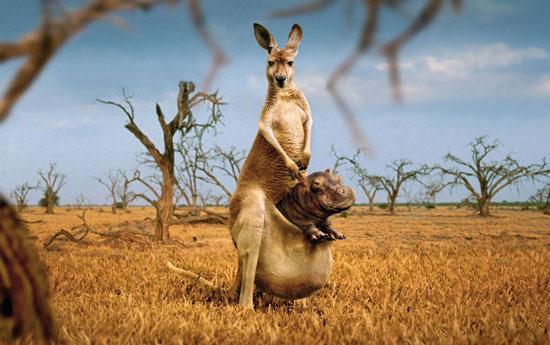 3821971_kangaroo_ (550x345, 53Kb)