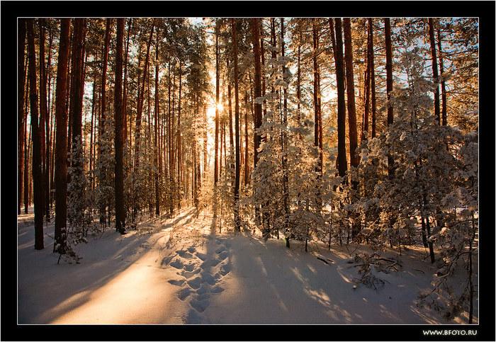 8 красивая зима (700x483, 194Kb)