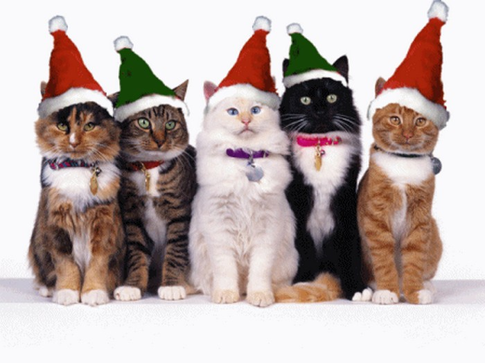 Праздничные красивые новогодние картинки для любителей котов