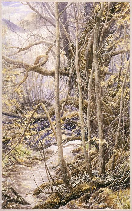 theoldforest (436x700, 619Kb)