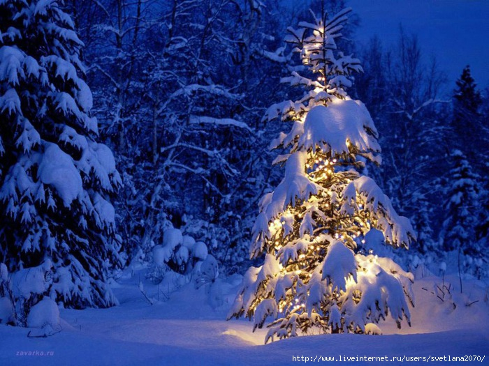 Winter_wallpapers__004554_ (700x525, 279Kb)