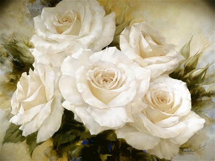 белые розы 3д фото