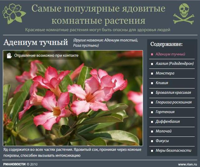 Безымянный-Ядовитые цветы (642x536, 66Kb)