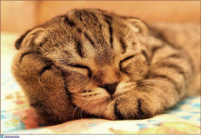 смешные кошки фото/1324416574_kotenok (700x480, 60Kb)