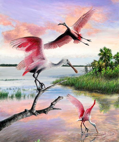 spoonbill-lagoon (500x600, 136Kb)