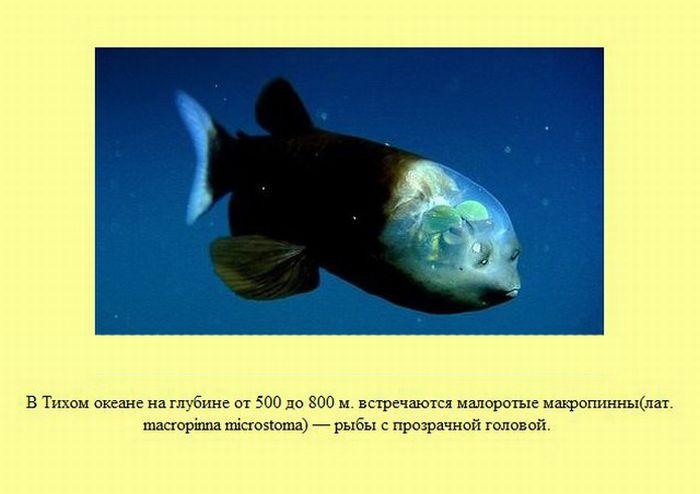 fakti_15 (700x494, 45Kb)