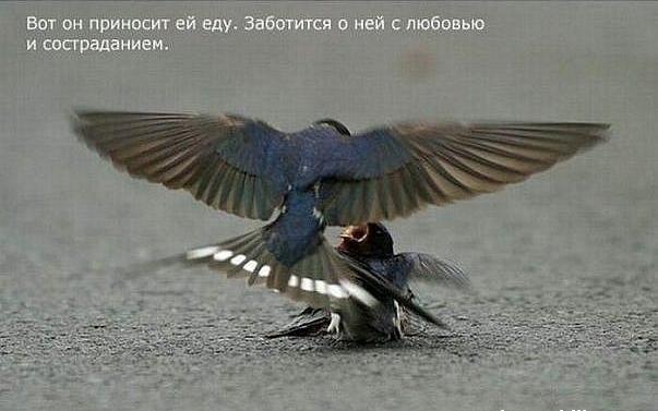 1324478217_Snimok_yekrana_20111221_v_233334 (603x377, 278Kb)