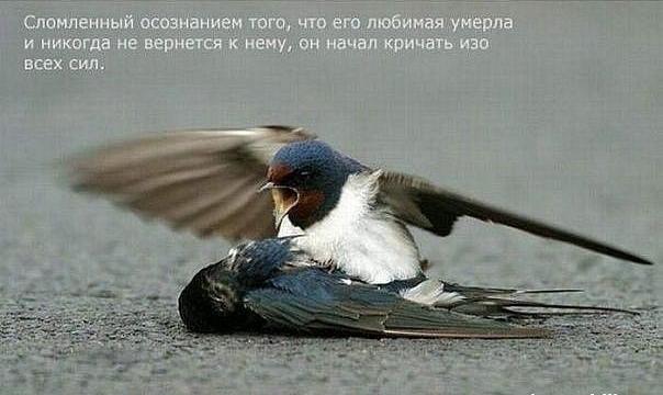 1324478291_Snimok_yekrana_20111221_v_233420 (604x360, 288Kb)