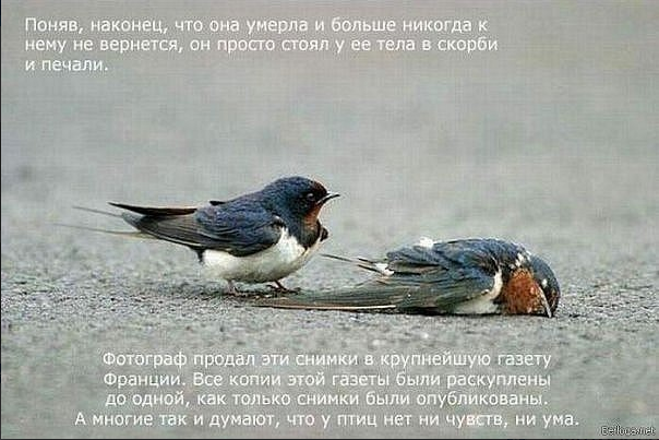 1324478374_Snimok_yekrana_20111221_v_233450 (604x403, 326Kb)
