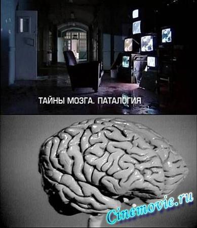 3431020_taini_mozga (389x450, 38Kb)
