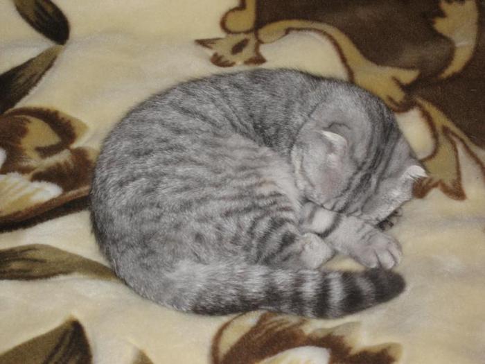 Котя (700x525, 46Kb)