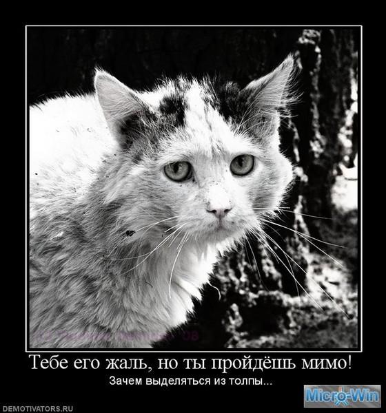 1266911245_kopiya-550184_tebe-ego-zhal-no-tyi-projdyosh-mimo (560x600, 92Kb)