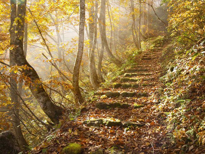 autumn-leaves-japan_25290_990x742 (700x525, 135Kb)