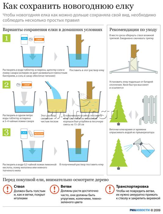 Инфографика как сохранить новогоднюю ёлку/1324544884__01 (534x700, 191Kb)