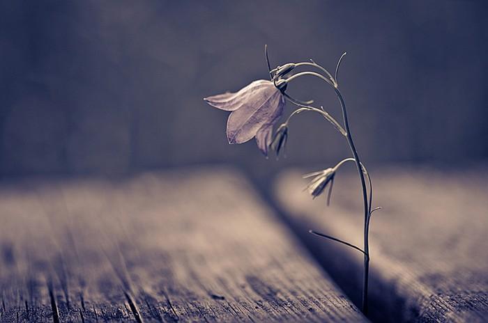 Атмосферные и красивые фото финского фотографа Микко Лагерстедт