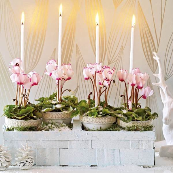 home-flowers-in-new-year-decorating2-1 (600x600, 60Kb)