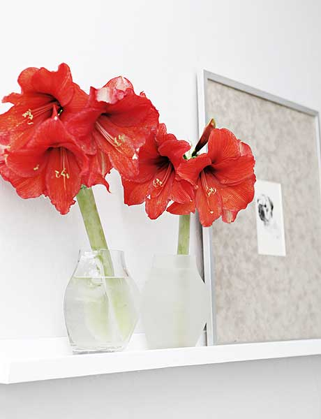 home-flowers-in-new-year-decorating3-4 (460x600, 21Kb)