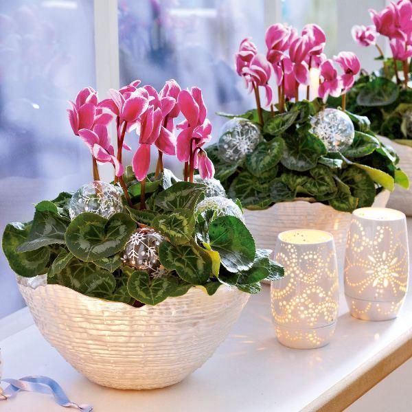 Другие растения с яркими цветами и