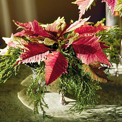 home-flowers-in-new-year-decorating1-8 (500x500, 112Kb)