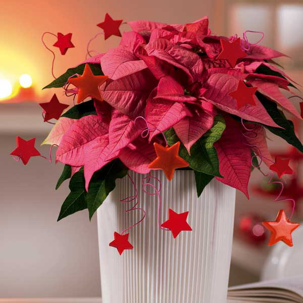 home-flowers-in-new-year-decorating1-10 (600x600, 63Kb)