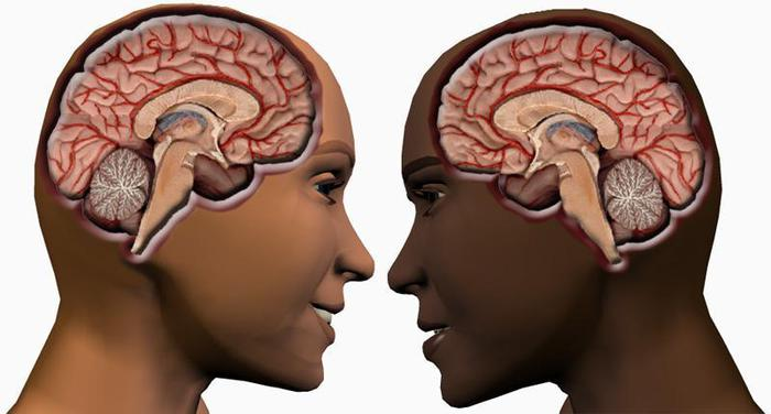 Как видят и слышат мужчины и женщины