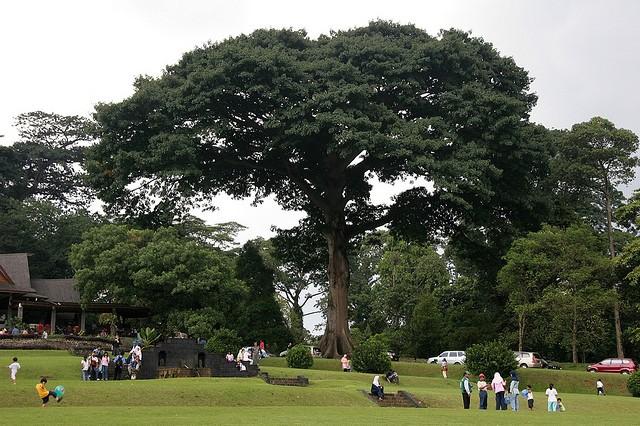 ботанический сад в индонезии/4171694_1 (640x426, 110Kb)