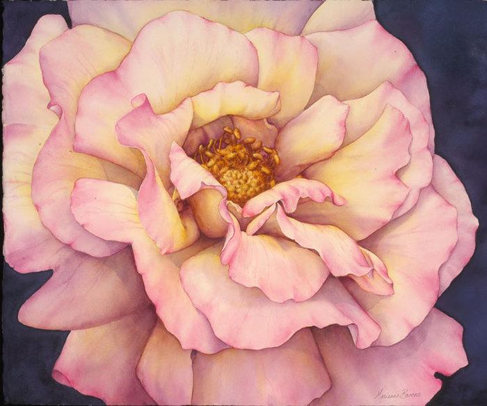 Rosa-Peace (700x584, 84Kb)