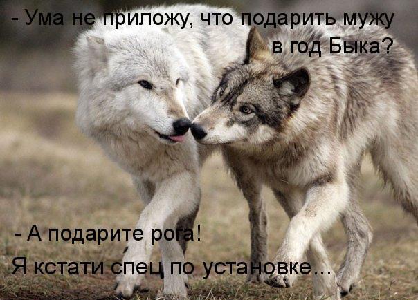 prikolnye-koty-i-sobaki-78 (604x434, 86Kb)